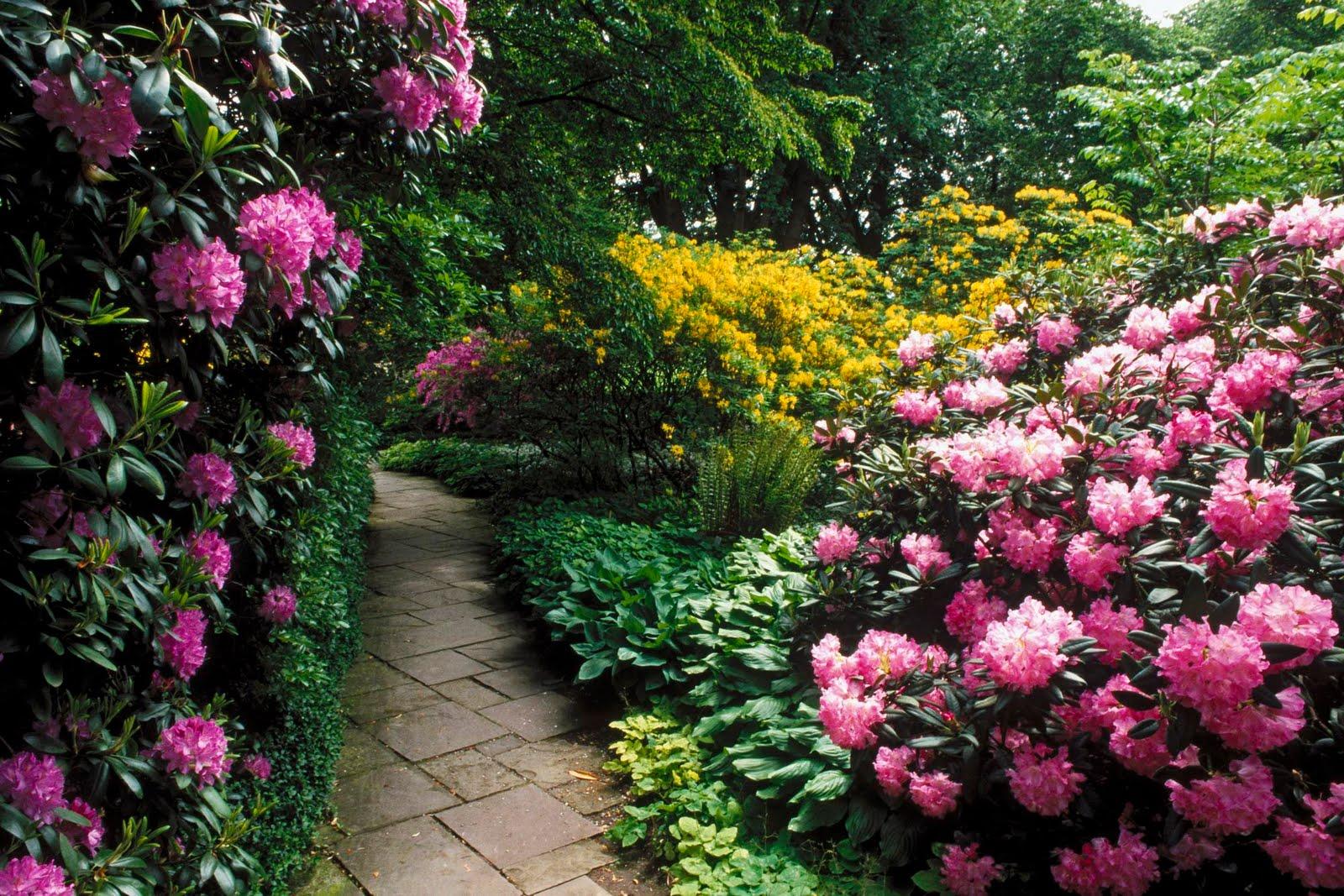 Flower Landscape Wallpaper Wallpapersafari