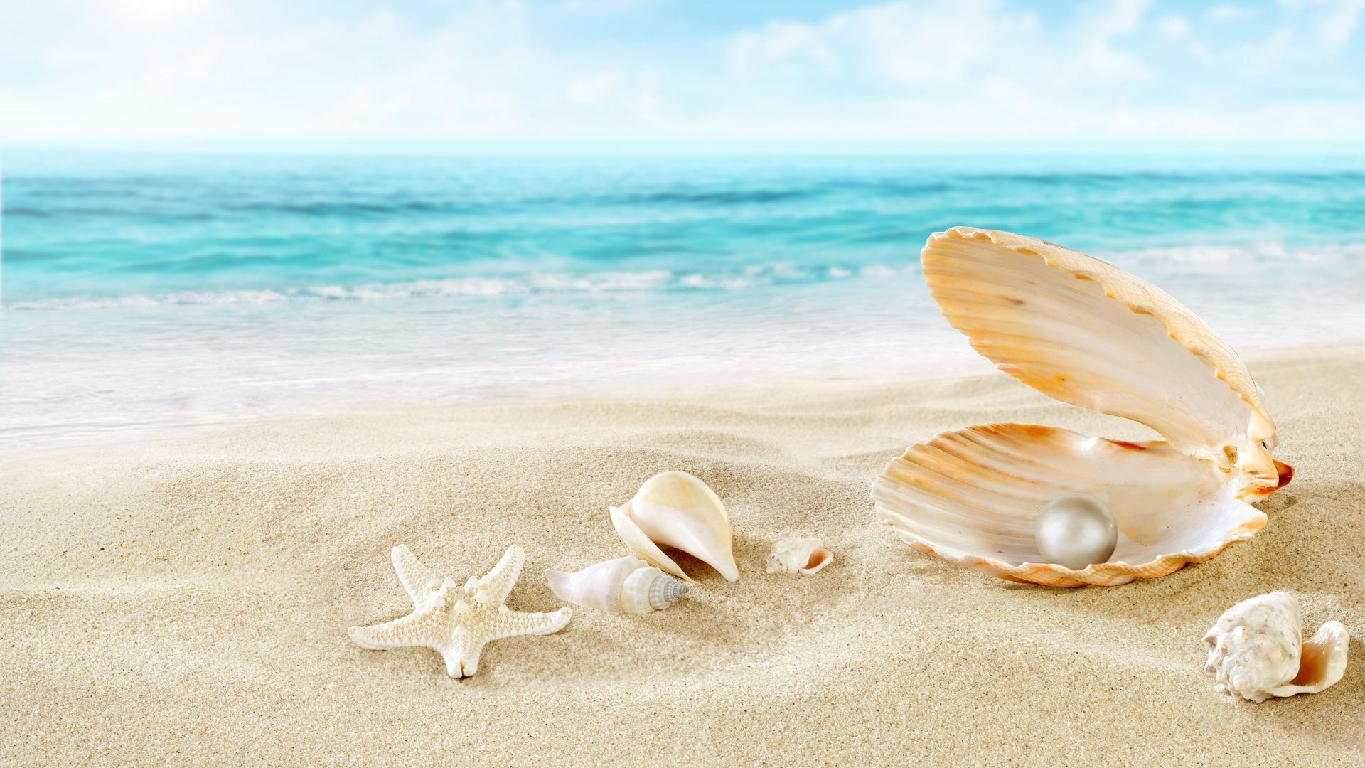 Shell Wallpapers and Background Images   stmednet 1920x1080