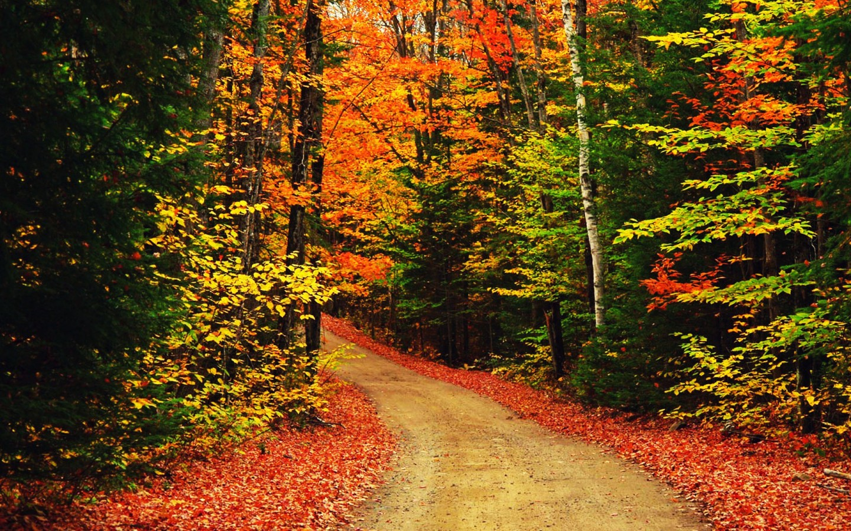 Autumn Trees Background   wallpaper 1440x900