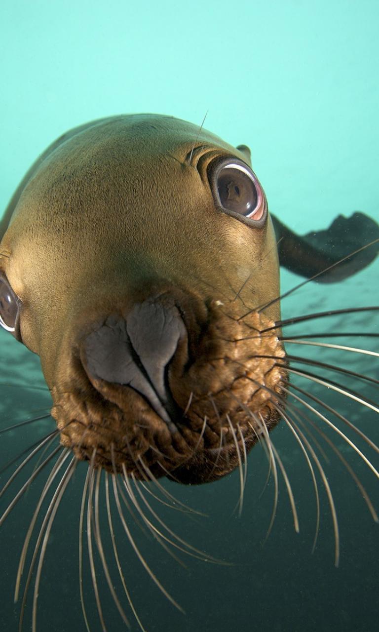 cgi british columbia sea lions underwater view wallpaper 24130 768x1280
