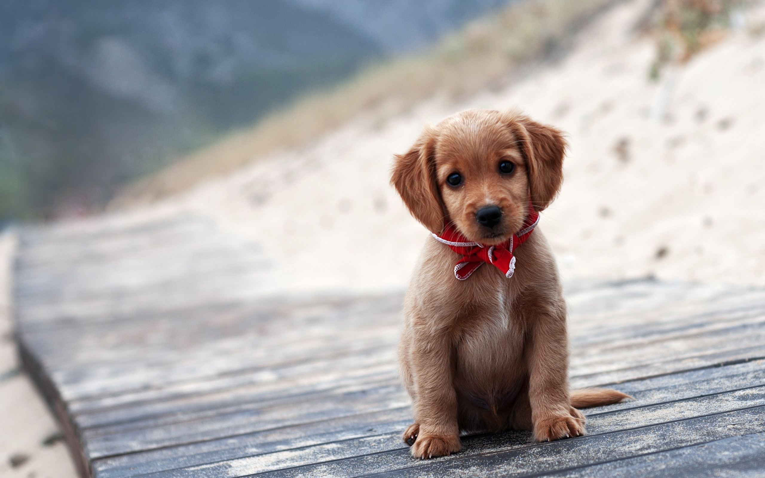 Cute Puppy Dog Sad HD Wallpaper 6537   HD Desktop Wallpapers HD 2560x1600