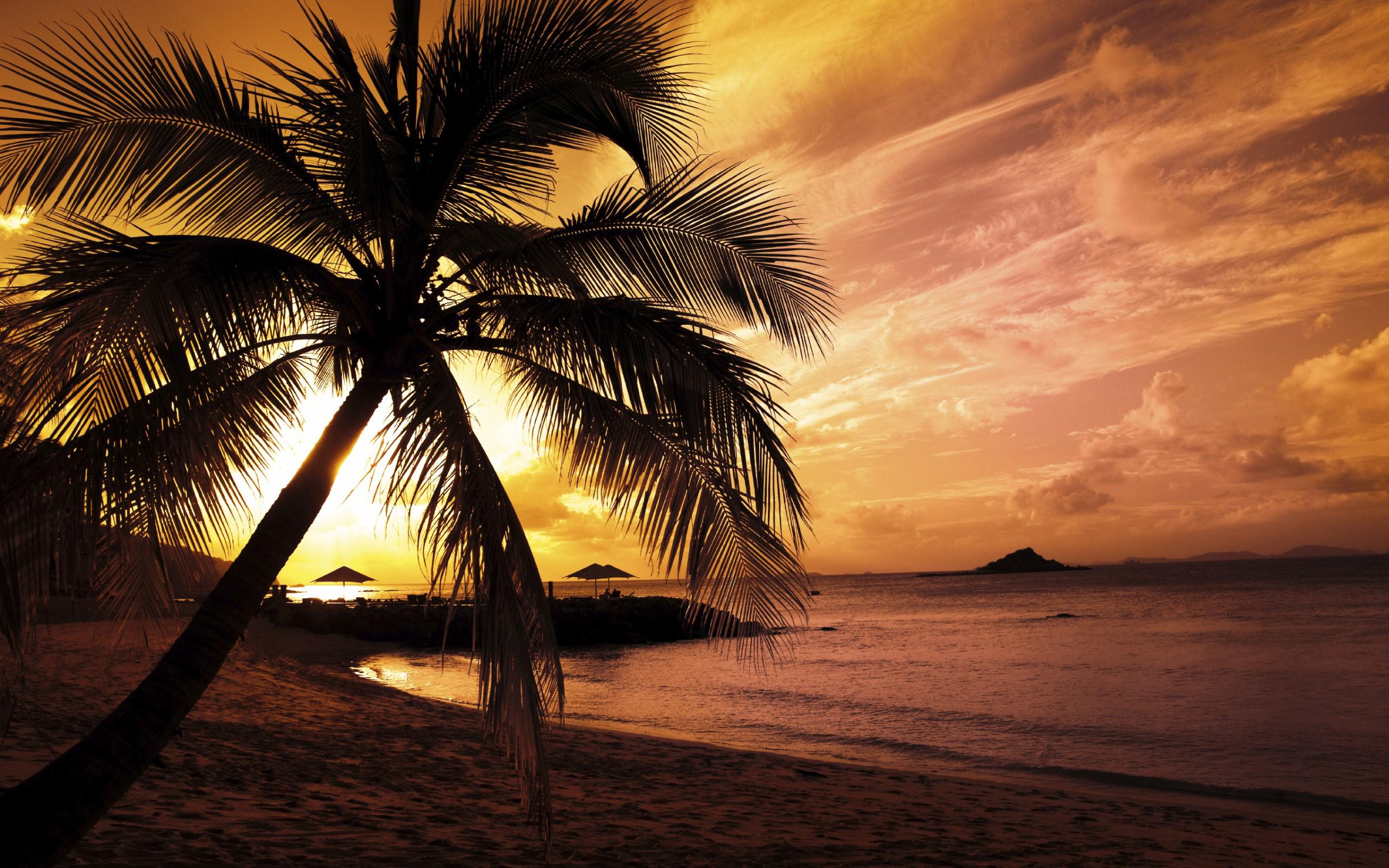 Sunset Palm Trees Hd Sunset Palm Trees HD 2560x1600 470 2560x1600