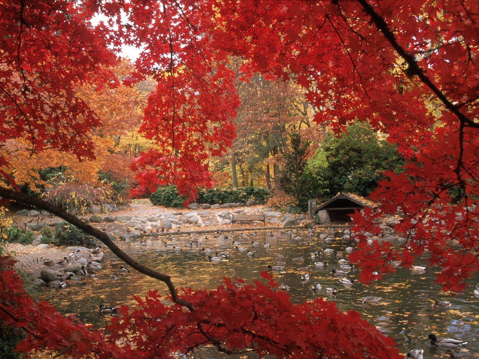 Pics Photos   Desktop Wallpapers Autumn Wallpaper 1600x1200