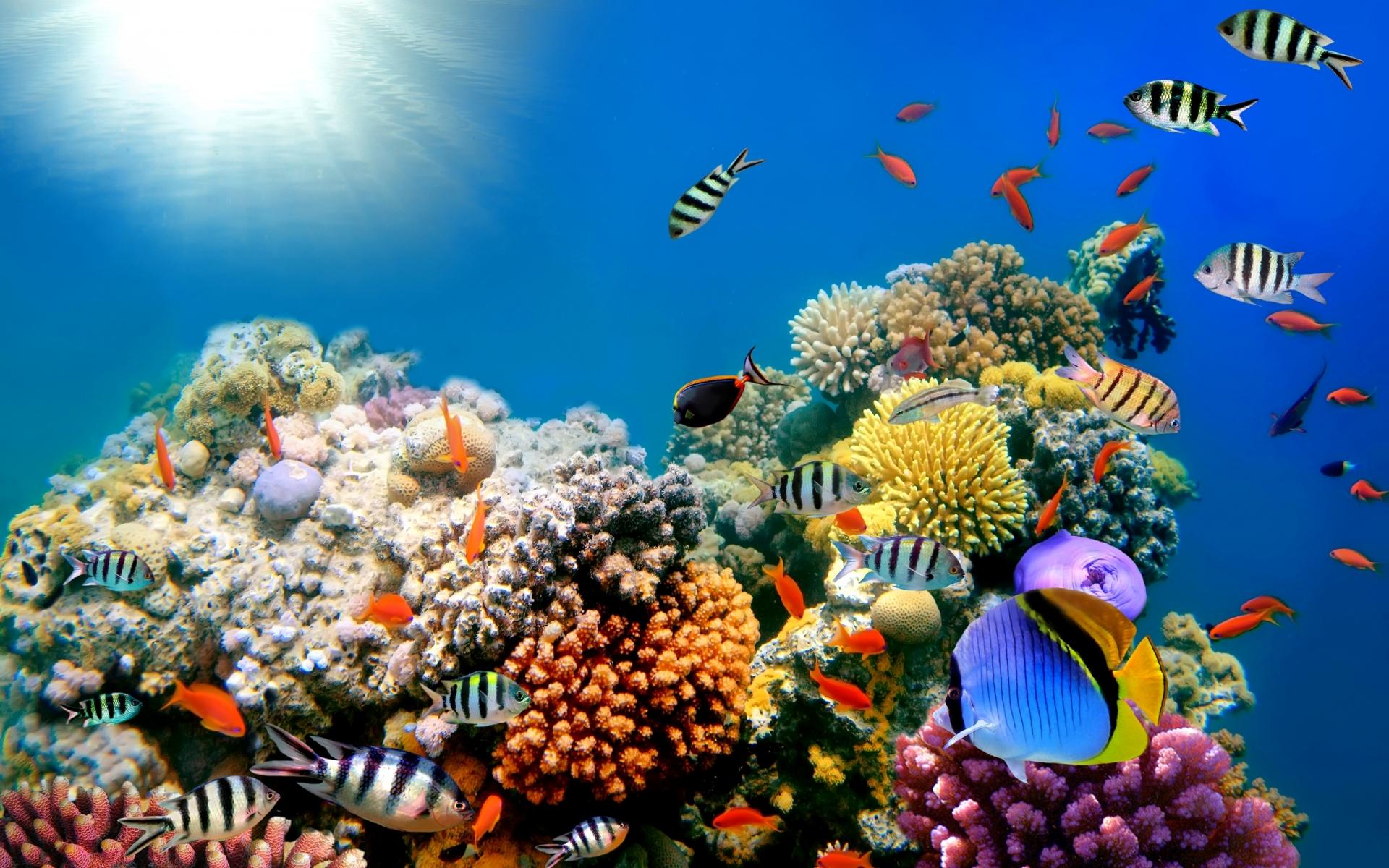 Reef ocean sea underwater wallpaper 1920x1200 31134 WallpaperUP 1920x1200