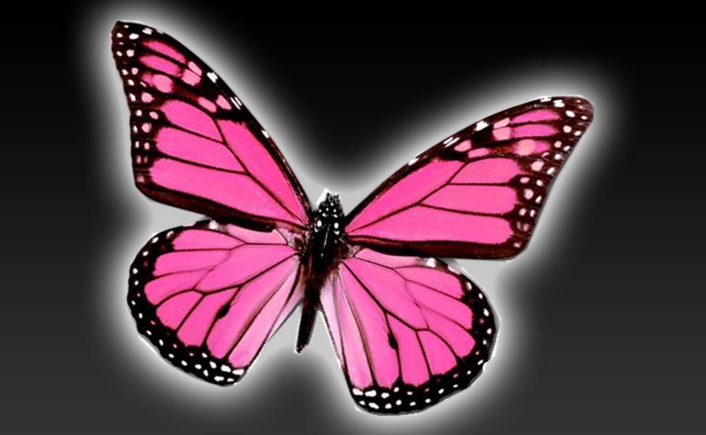 Pink Butterfly Wallpaper Desktop Wallpapersafari