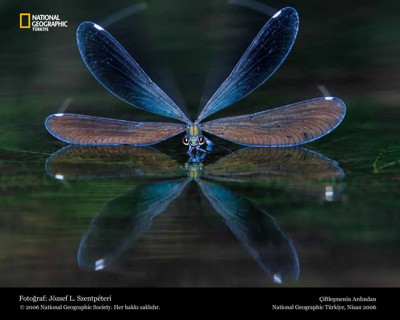 Funny Dragonfly wallpaper for desktop Funny Animal 1280x1024