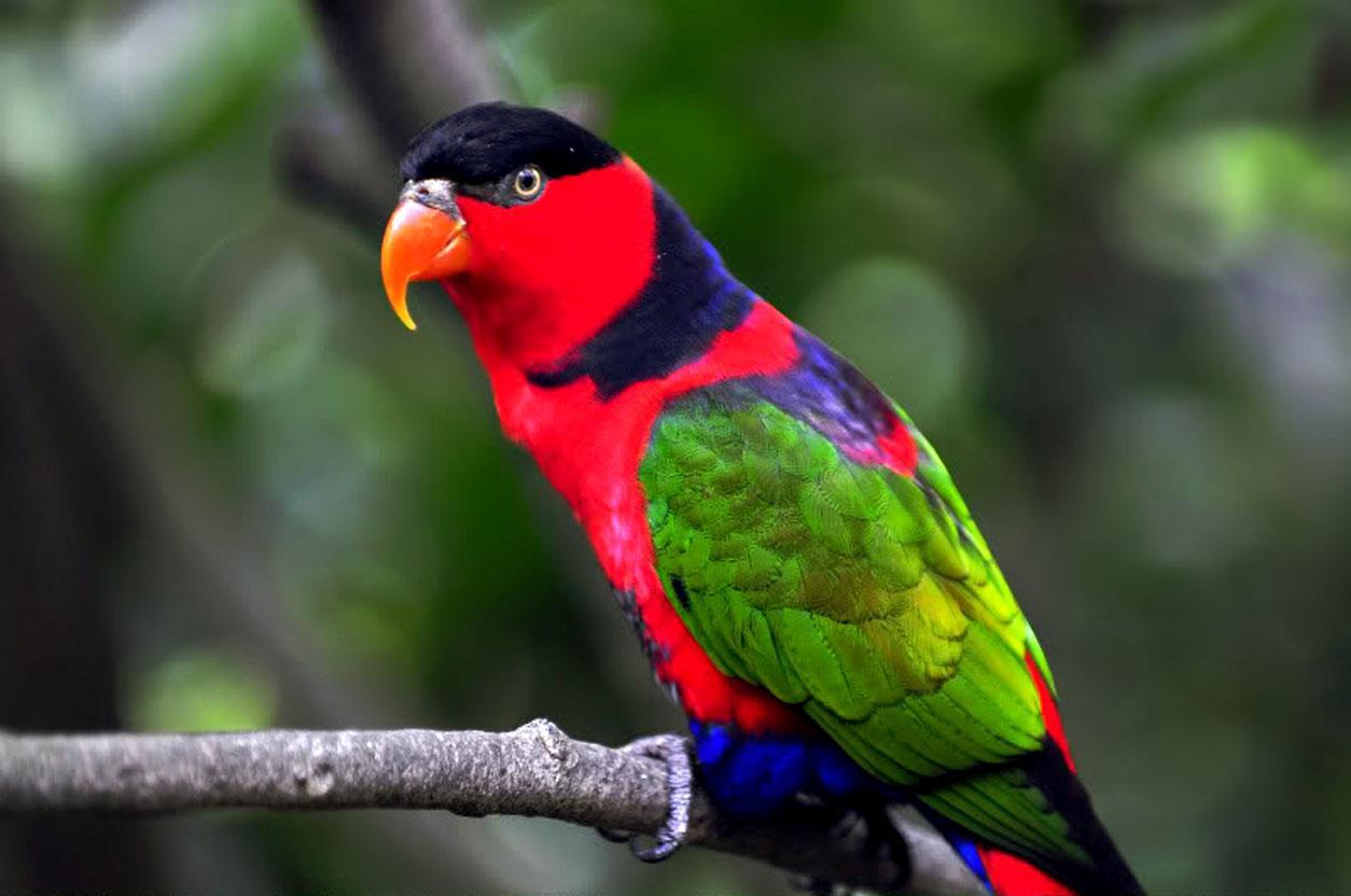 parrot bird wallpaper couple parrot bird wallpaper f lying parrot bird 1254x832
