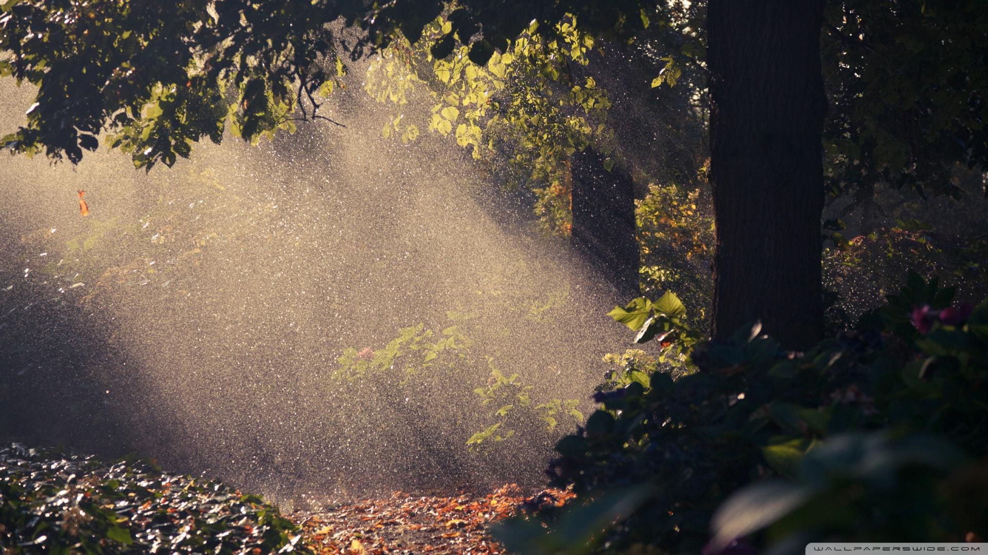 forest wallpaper rain summer images 1920x1080 1920x1080