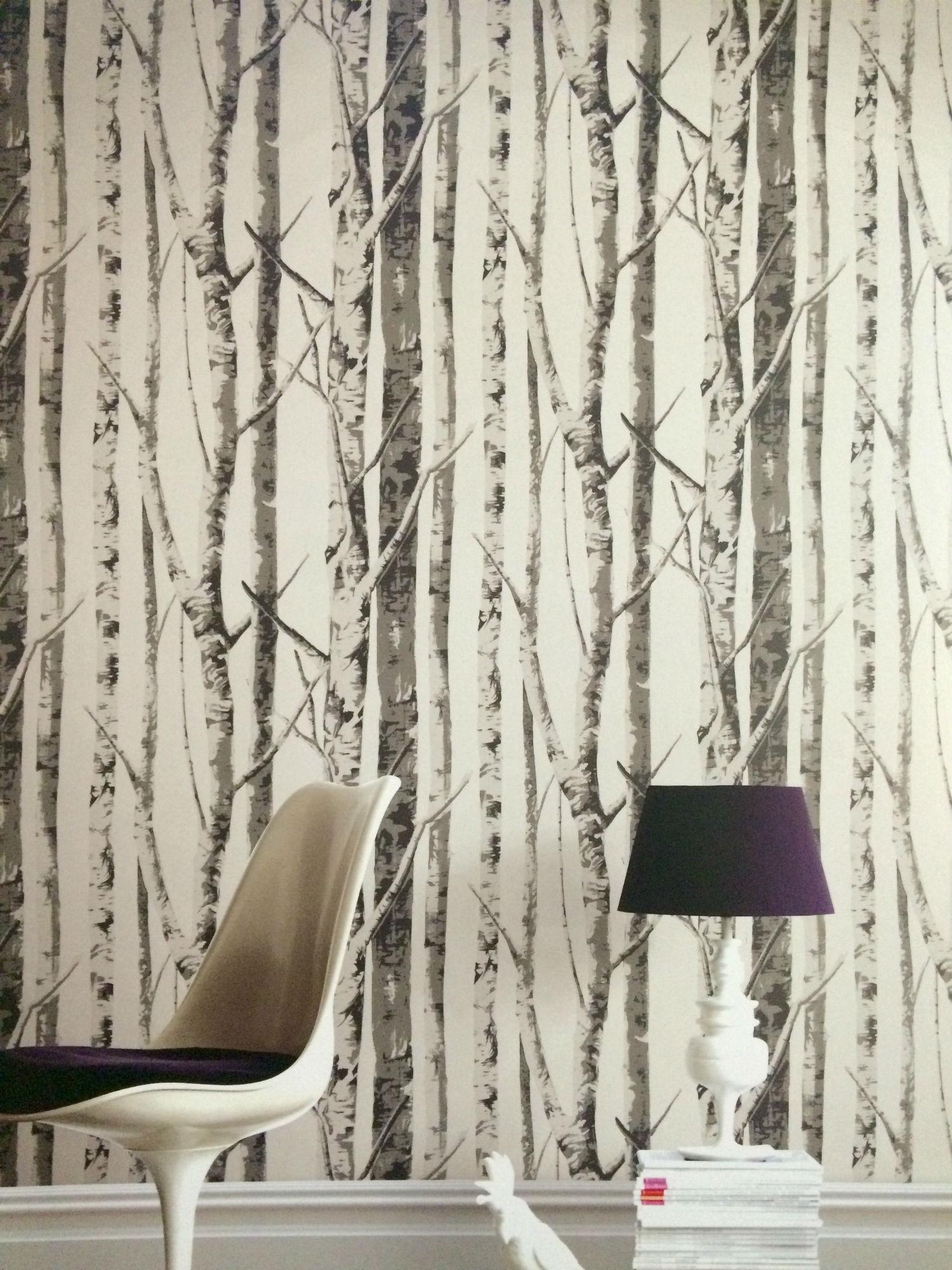 Birch Tree Wallpaper Border Wallpapersafari