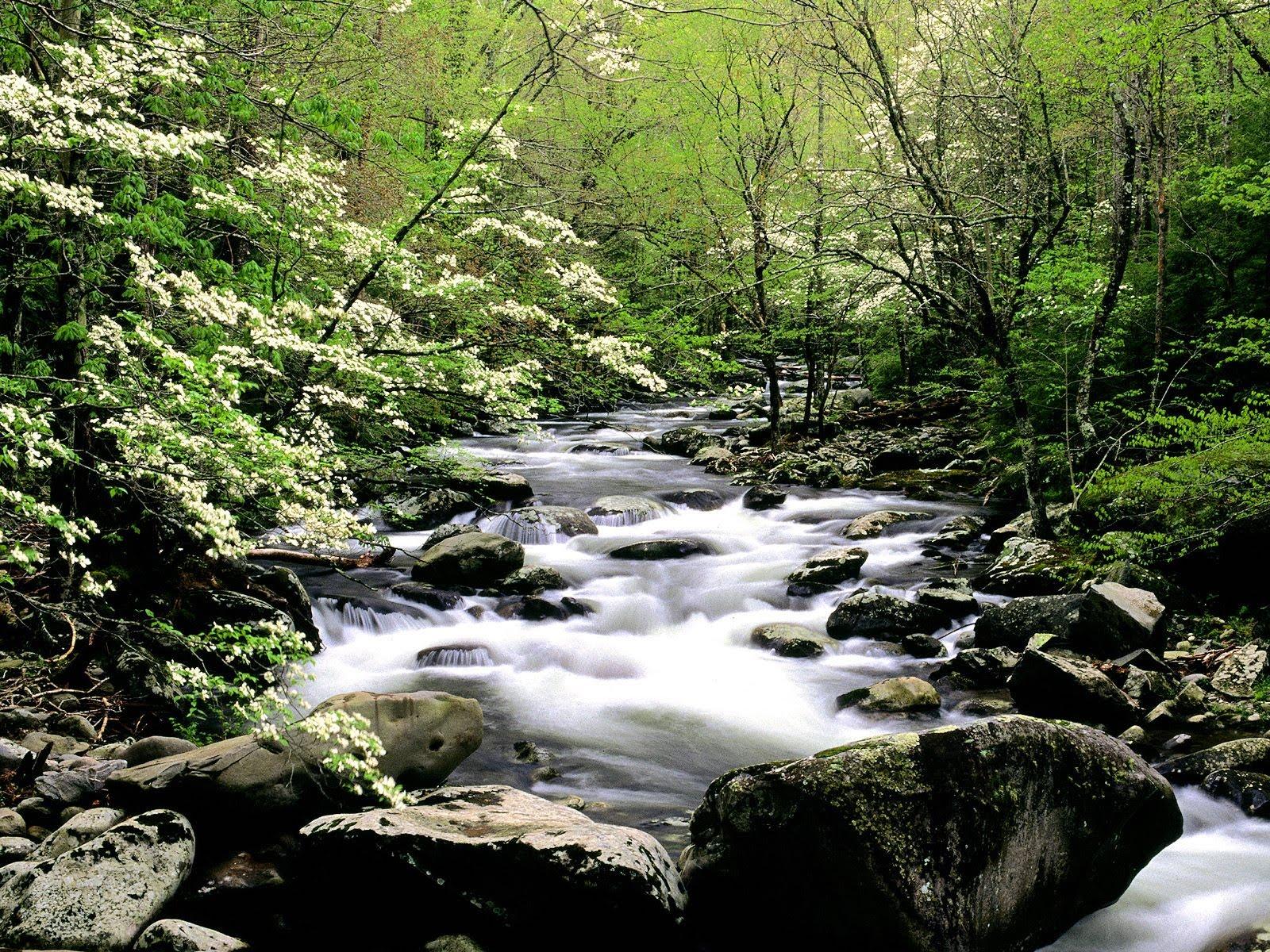Wallpaper Nature Scenes   Rivers and Creeks n 2 Fiumi e Insenature 1600x1200
