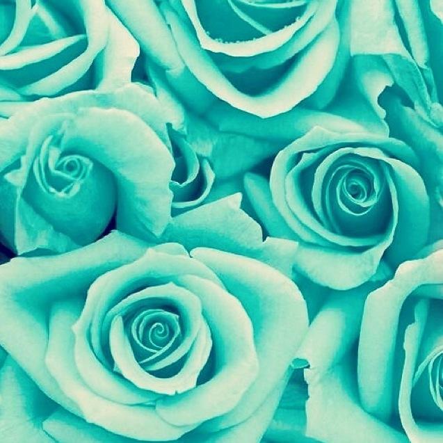 Green Mint Green Aqua Roses Wallpaper Background | Facebook Wallpapers .