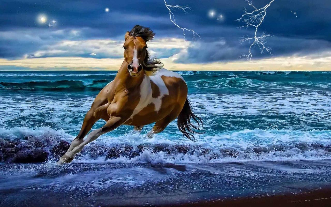 Beautiful Horse   Horses Wallpaper 22410538 1280x800