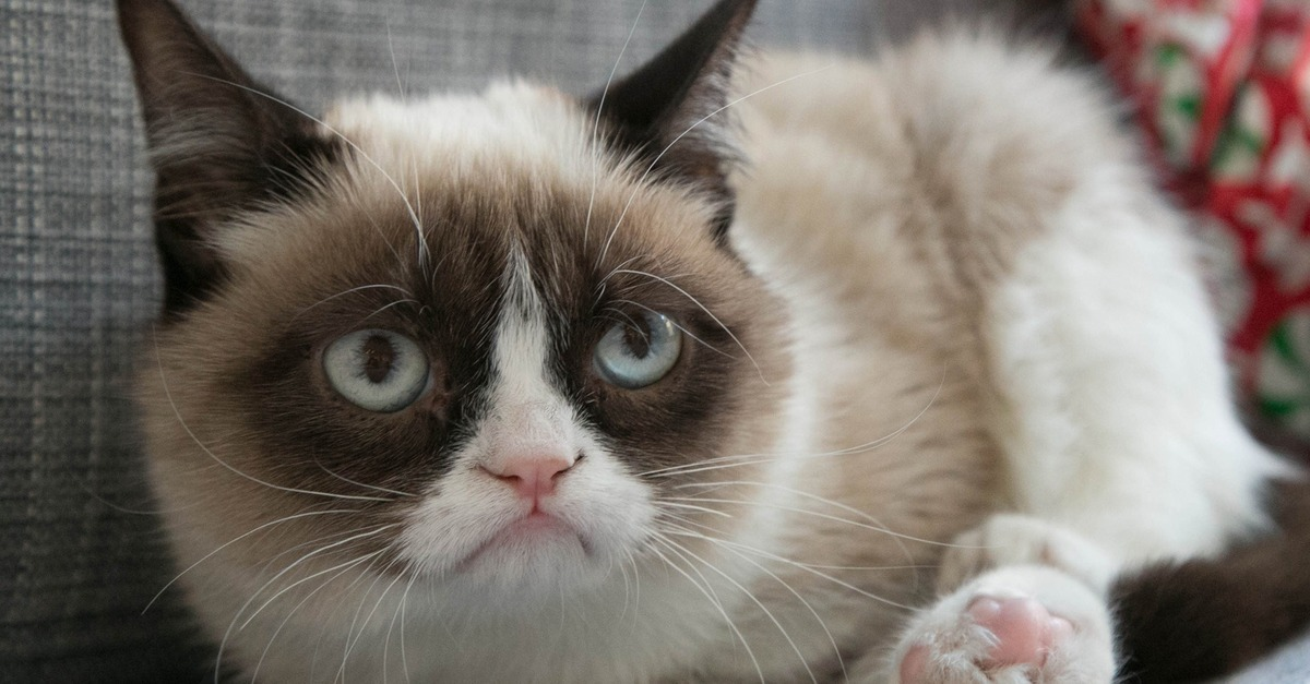 Grumpy Cat loopelecom 1200x627
