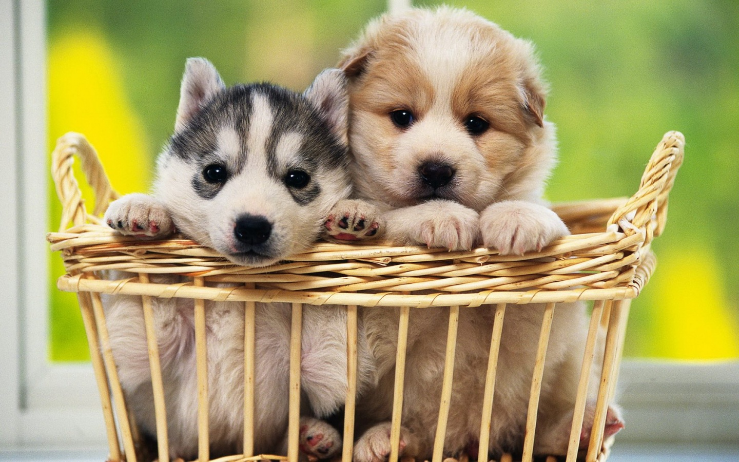 Cute Dogs Wallpapers Download Cute Dogs Wallpapers for Desktop 1440x900