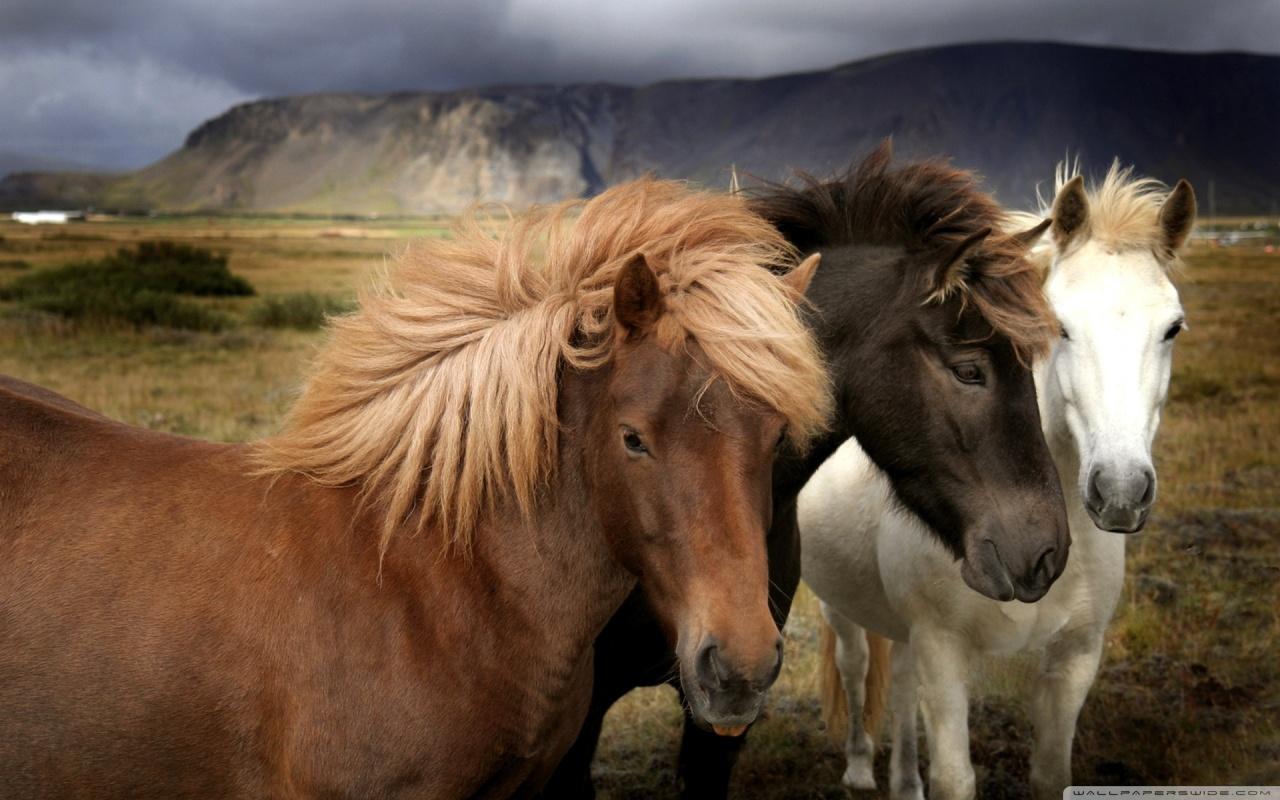 My Wallpapers Corner Stylish Horse Wallpaper 1280x800