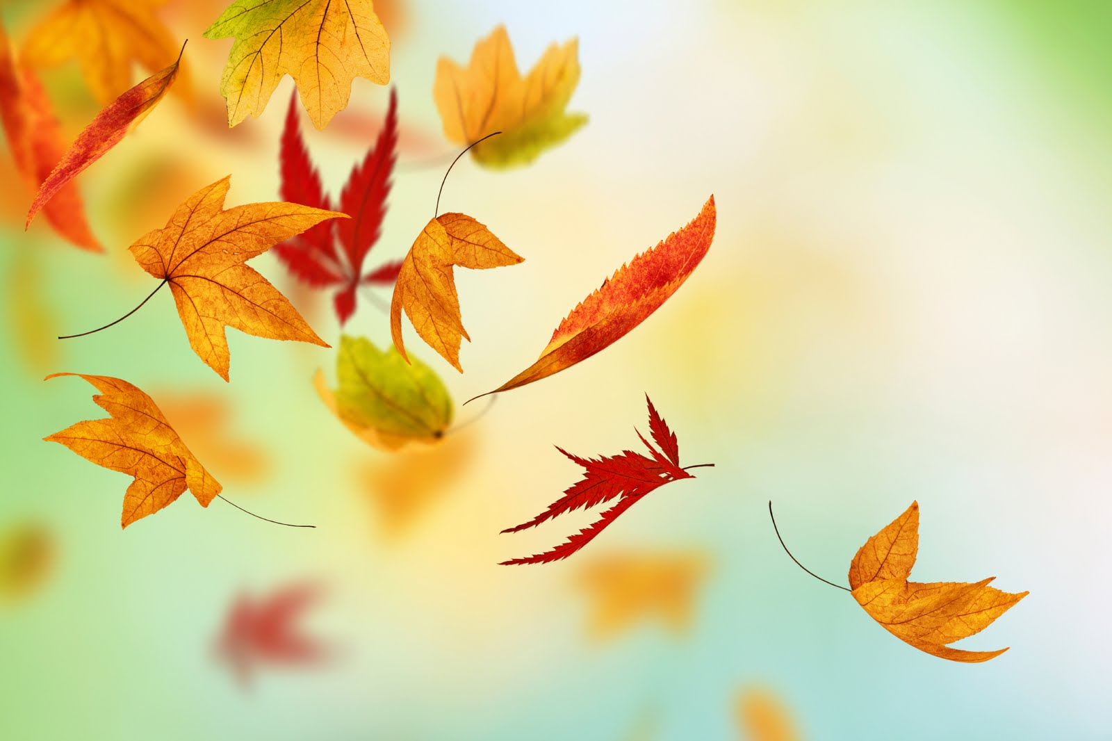 Autumn Fall Leaves HD Live HD Wallpaper HQ Pictures Images Photos 1600x1066