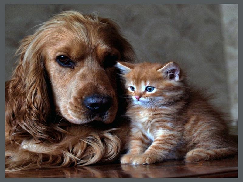 Cat and Dog Desktop Wallpaper - WallpaperSafari