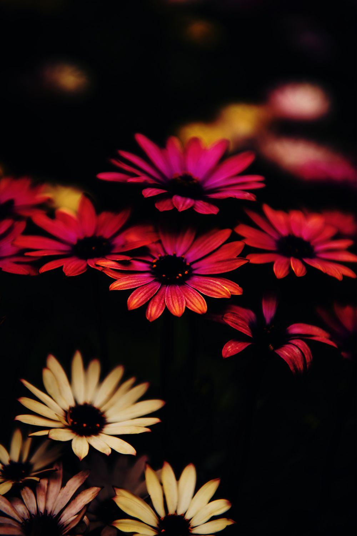 Beautiful Flower Wallpaper HD Download in 2020 Beautiful 1000x1500