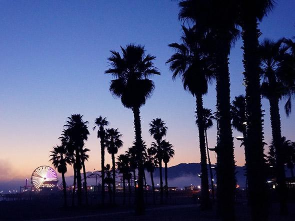 California Palm Trees Wallpaper Hd Palm trees 590x443