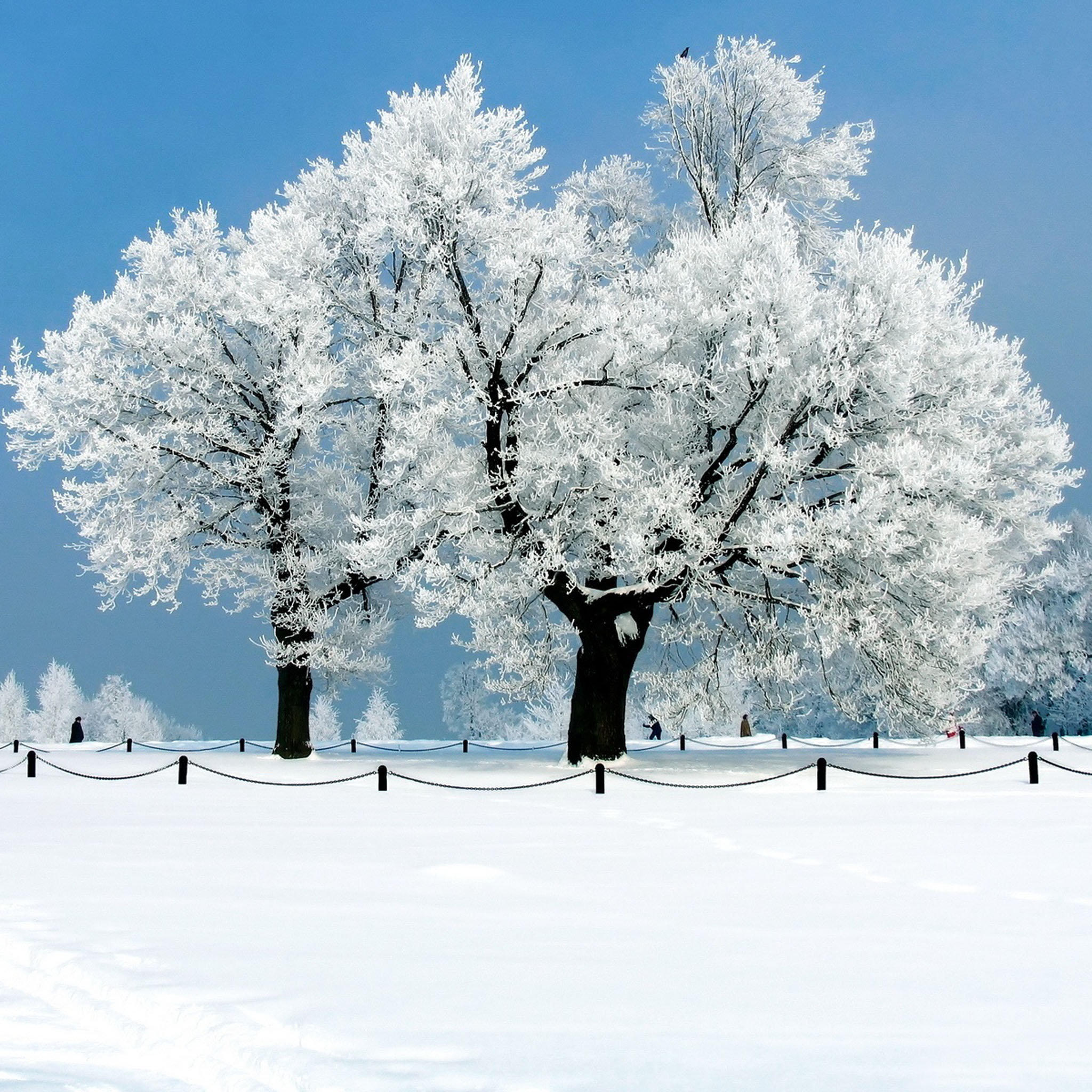 iPad Wallpapers Beautiful winter snow scenes   Natural Scenery New 2048x2048