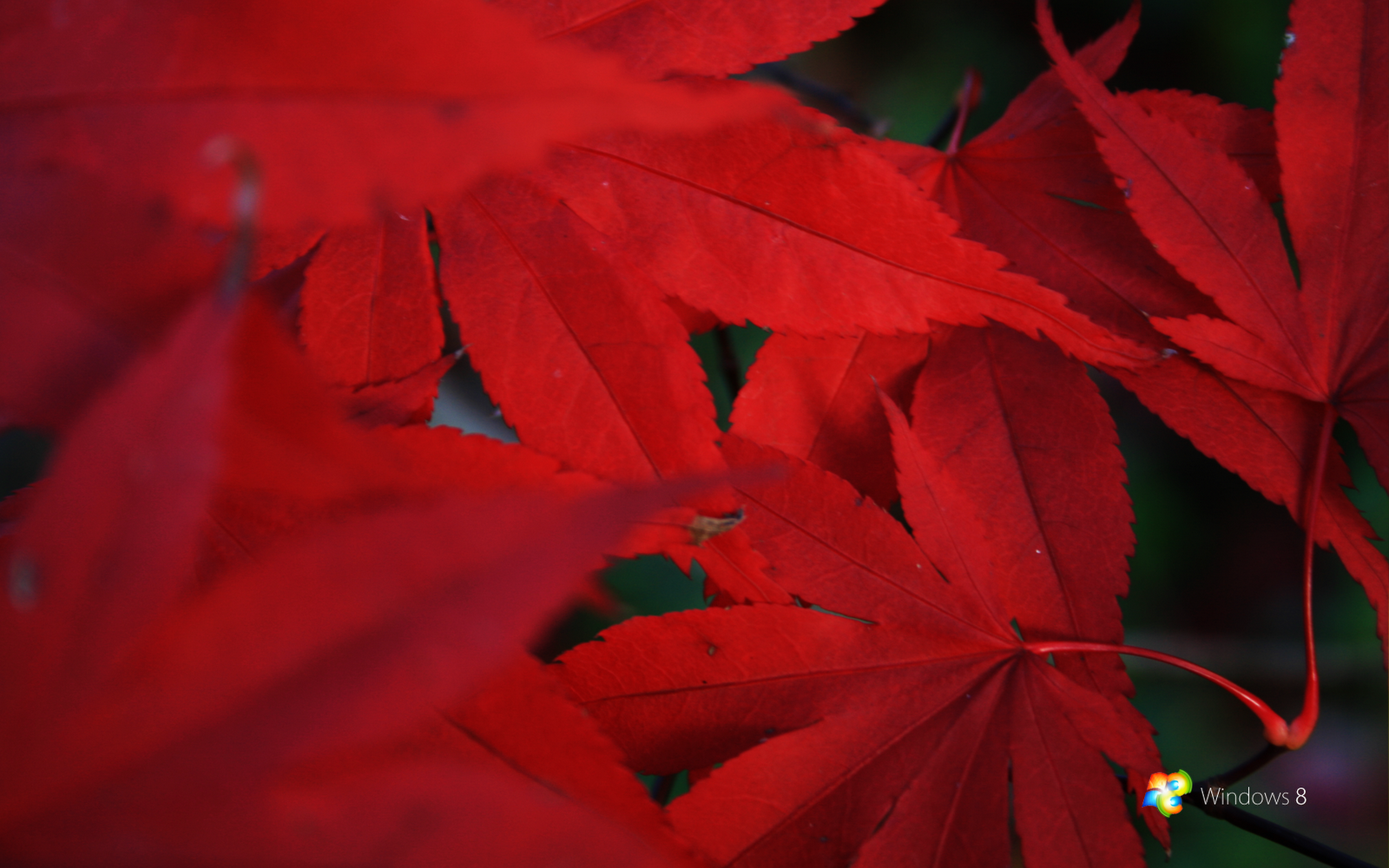 Red Windows 10 Wallpaper HD