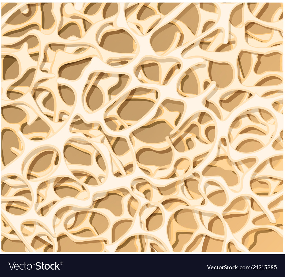 Bone structure osteoporosis medical background Vector Image 1000x972