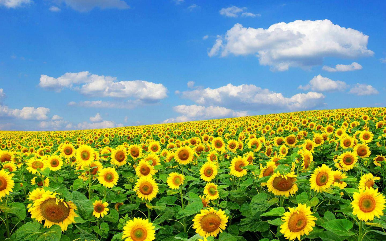Spring Flowers 1440x900 1440x900