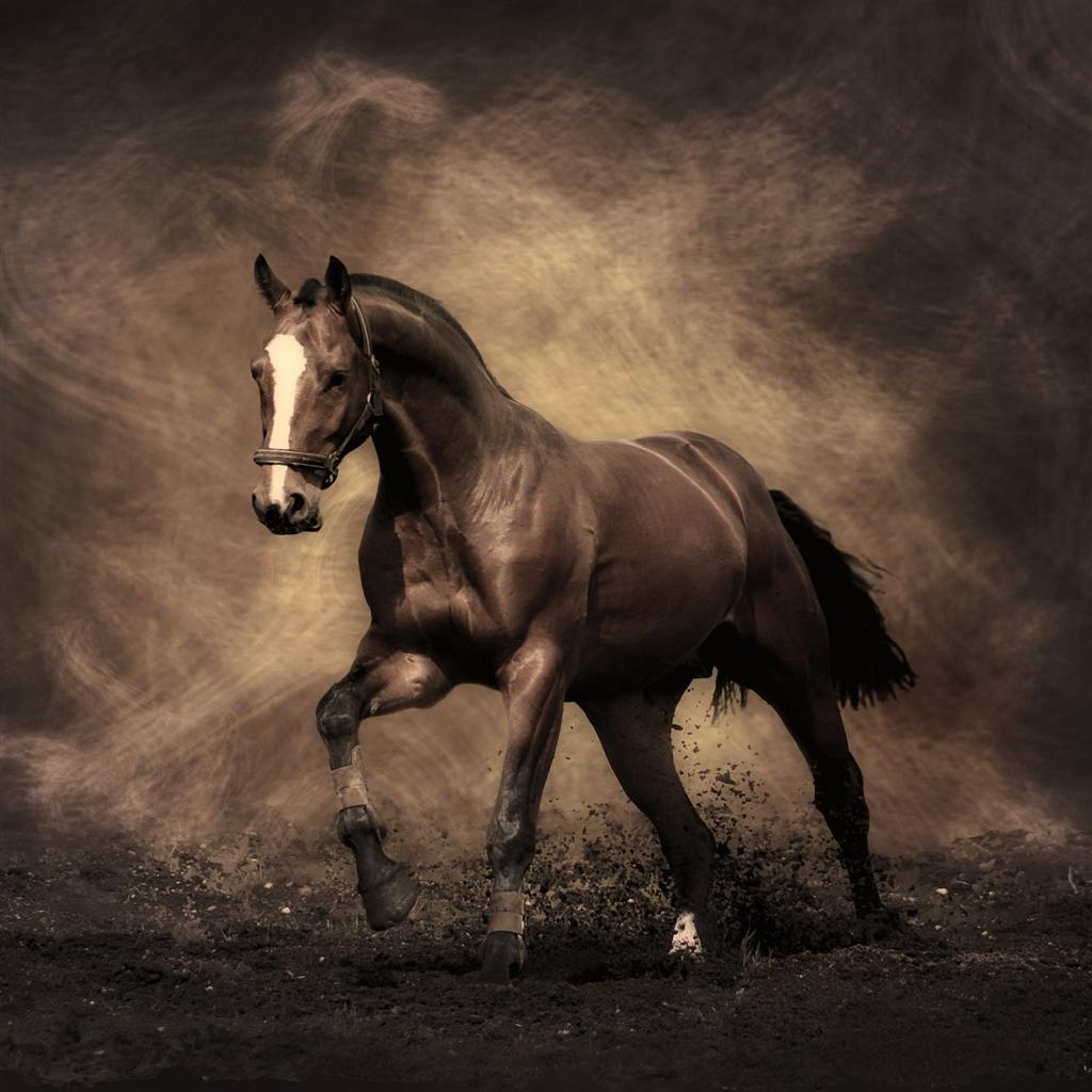 Running Horse iPad Air Wallpaper Download iPhone Wallpapers iPad 1024x1024