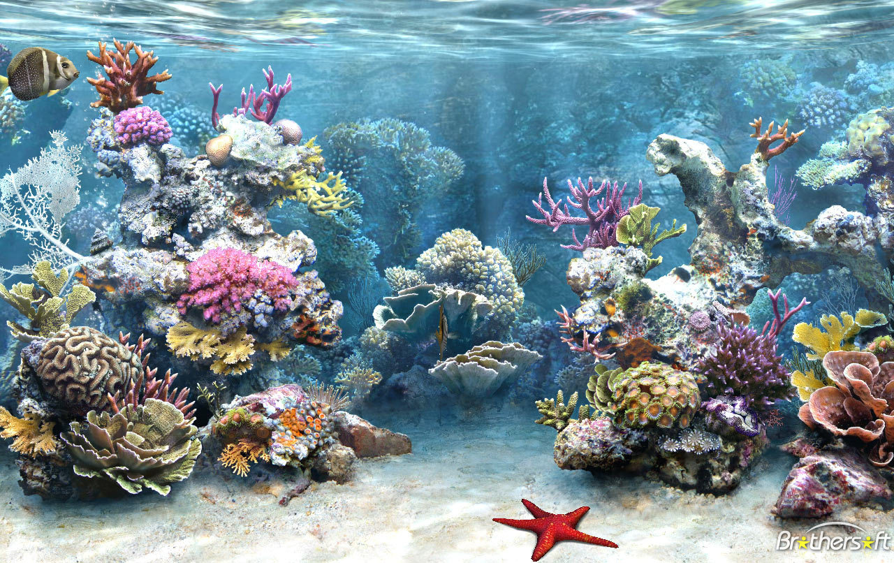 virtual aquarium screensaver download 1280x806