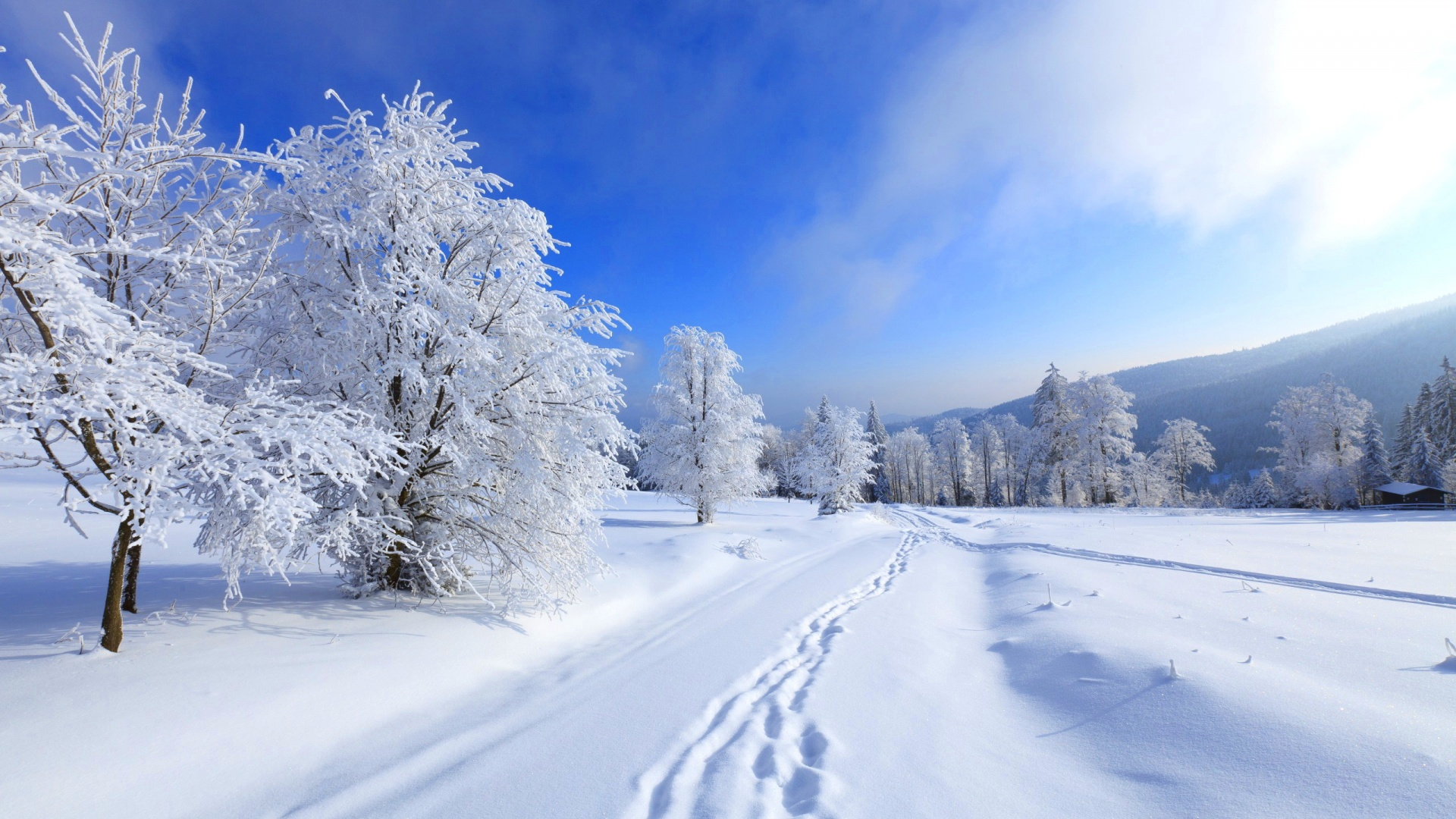 Winter High Definition 1920x1080 1920x1080