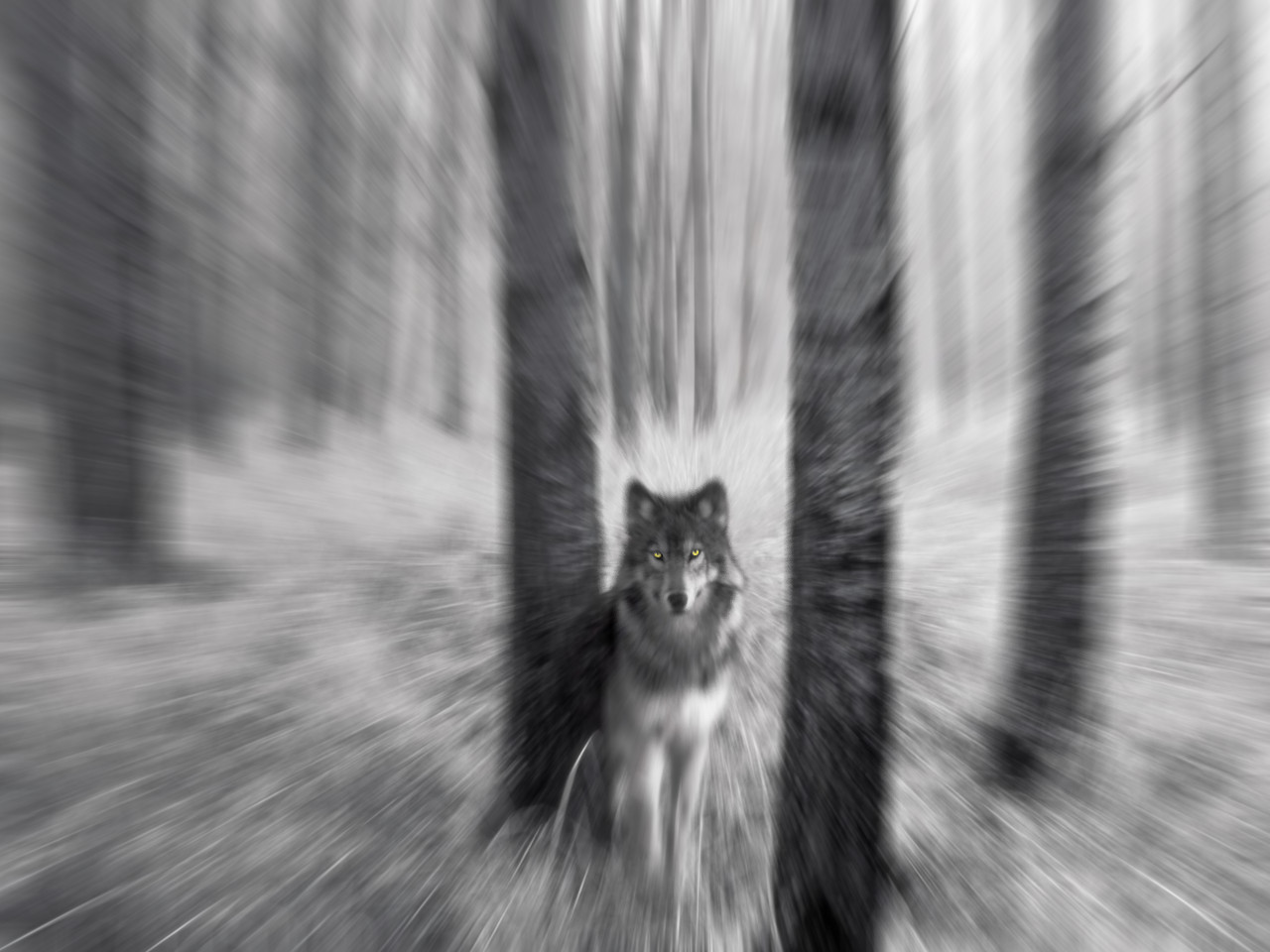 Iphone wallpaper tumblr wolf - Related Pictures Backgrounds Trippy Backgrounds Tumblr Desktop