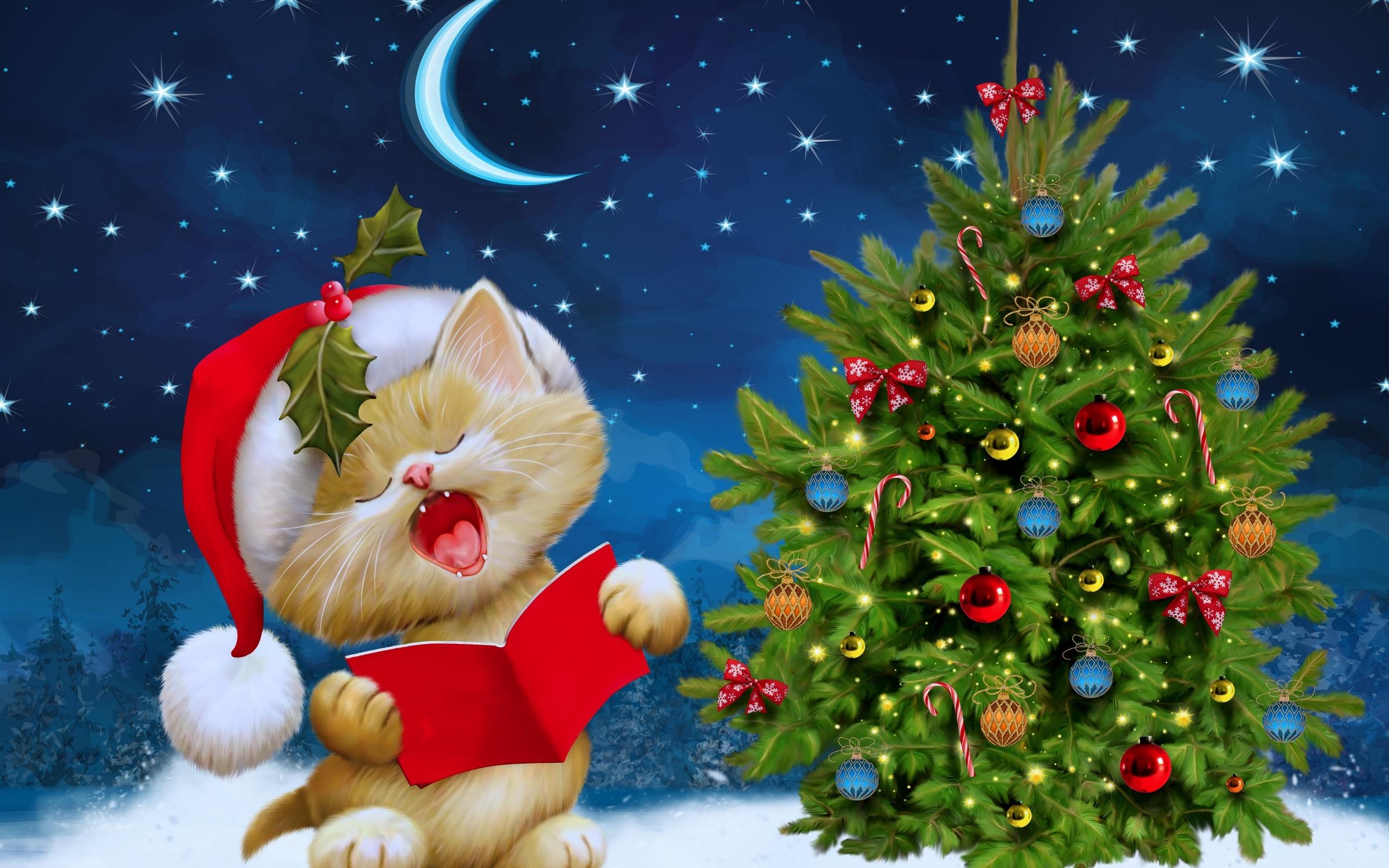 Merry Christmas kitten Ultra HD wallpaper UHD WallpapersNet 2560x1600