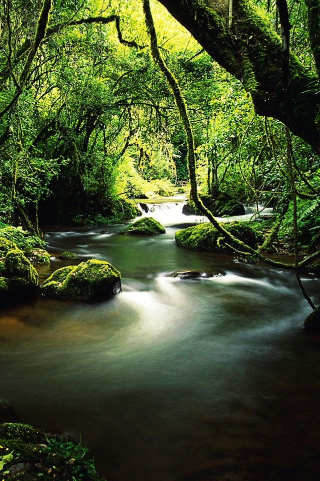 tropical jungle wallpaper wallpapersafari