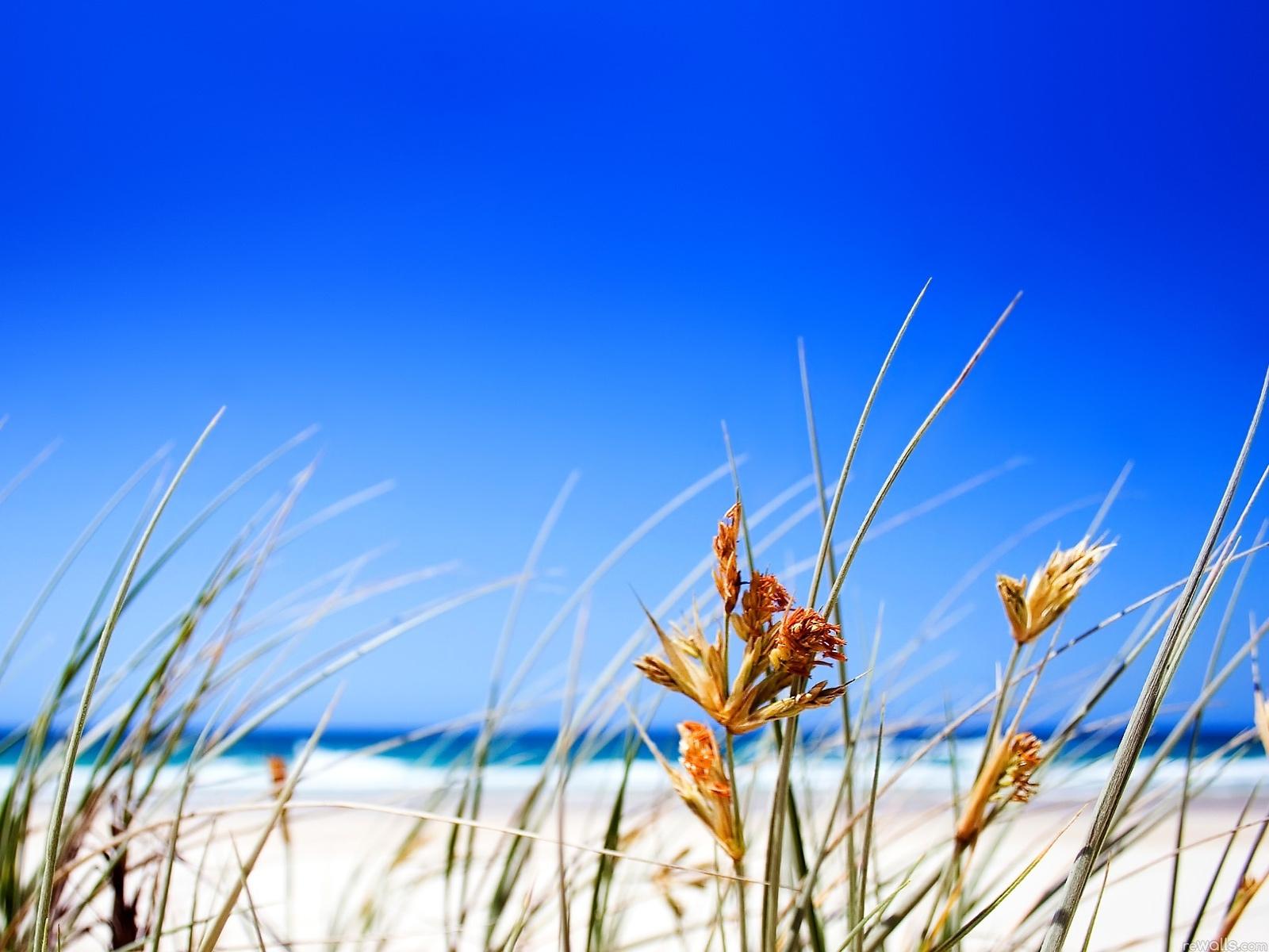 Summer Beach Grass computer desktop wallpaper 1600x1200