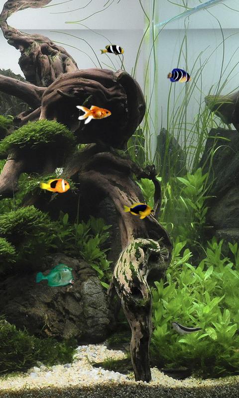 Aquarium Live Wallpaper 1011 screenshot 0 480x800