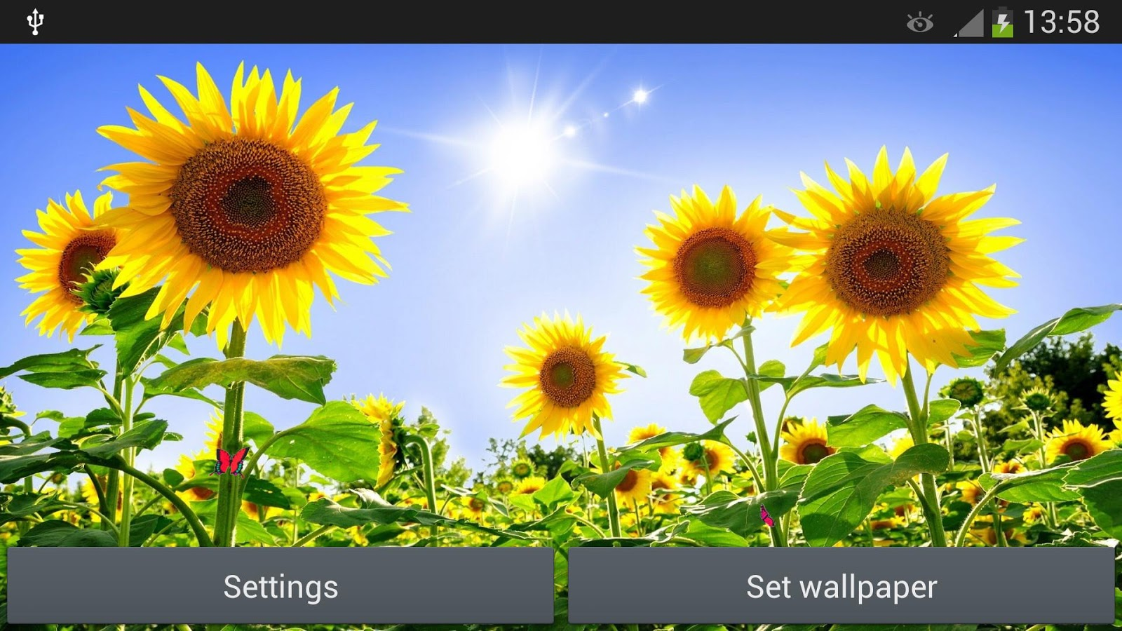 Sunflowers Live Wallpaper   Android Apps on Google Play 1600x900