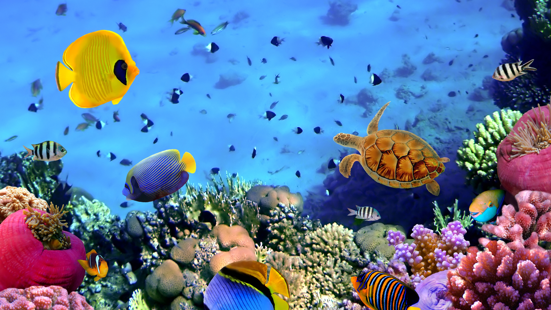 Coral Reefs Wallpapers HD Widescreen Desktop Backgrounds 1920x1080
