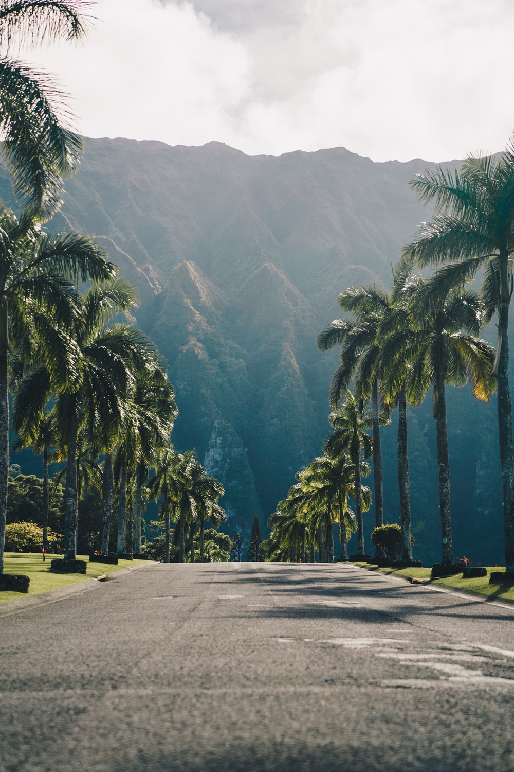 500 Hawaii Pictures Download Images on Unsplash 1000x1500