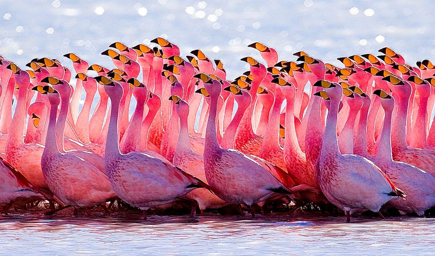 Pink Flamingo Wallpaper - WallpaperSafari
