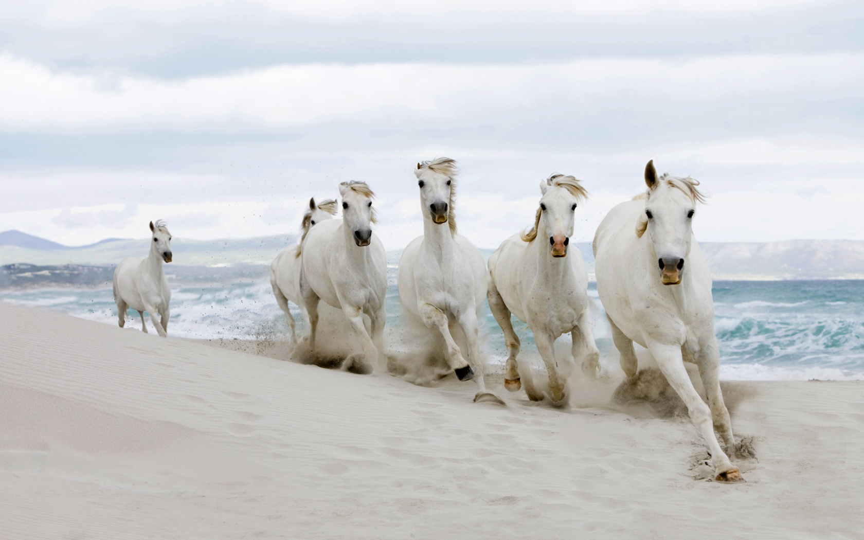 Free Download Seven Horse Wallpaper Sf Wallpaper 1680x1050 For