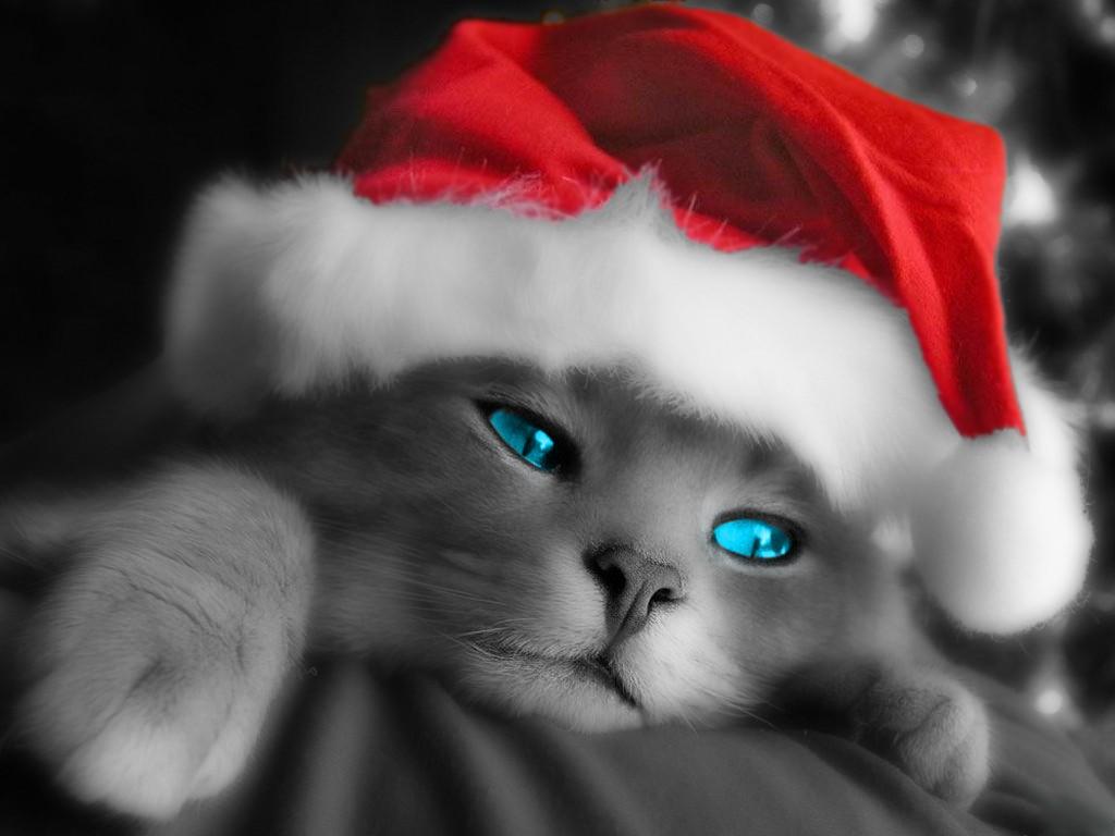 Cute Christmas Kitten Wallpapers Christian Wallpapers 1024x768