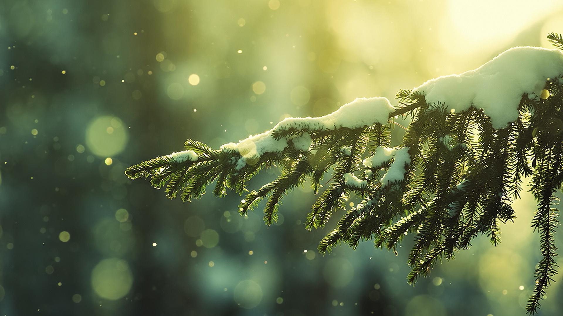 Winter Nights and Christmas Lights 1920x1080