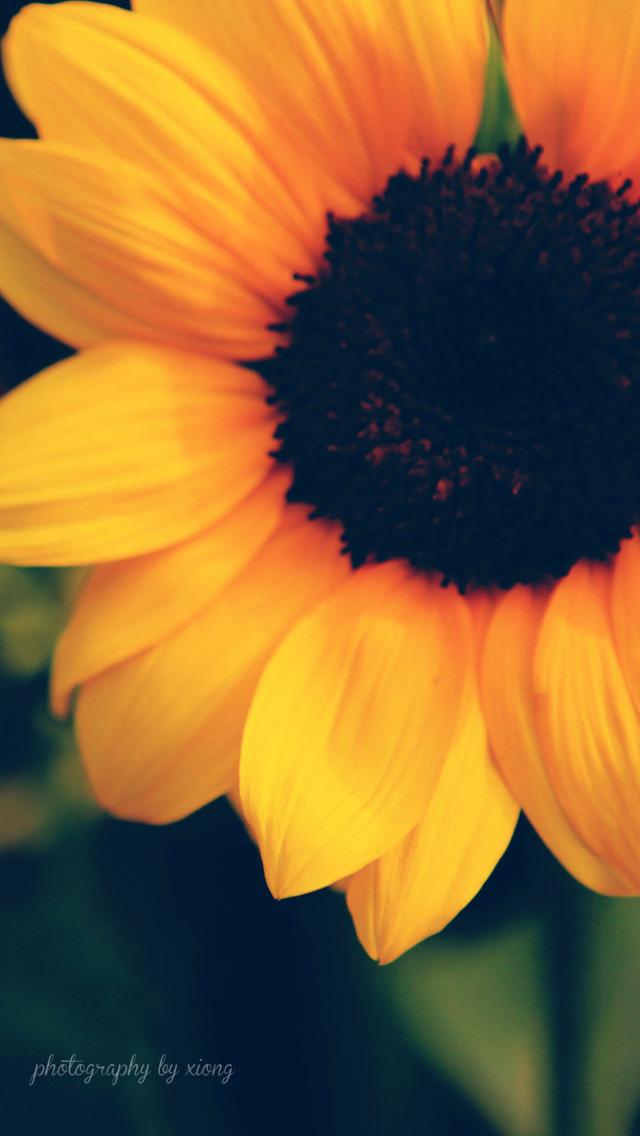 Flower Wallpaper for iPhone - WallpaperSafari