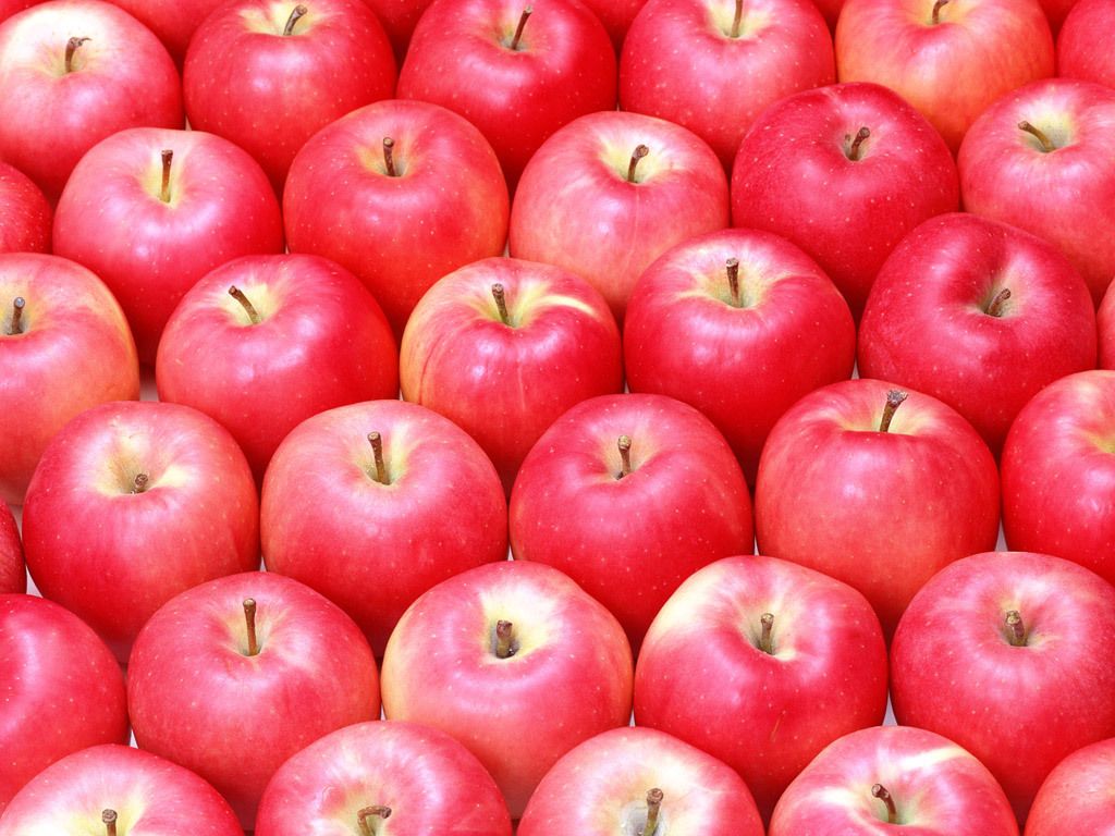 Fruit Photography Apples on tree Fresh Apples 1024768 NO36 1024x768