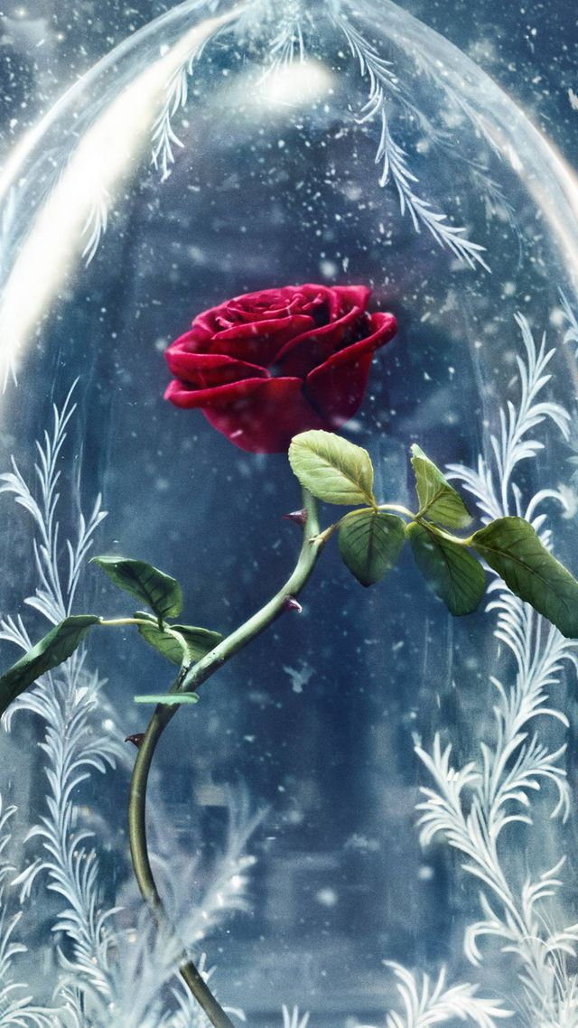 Wallpaper Beauty and the Beast rose red best movies Movies 11557 640x1138