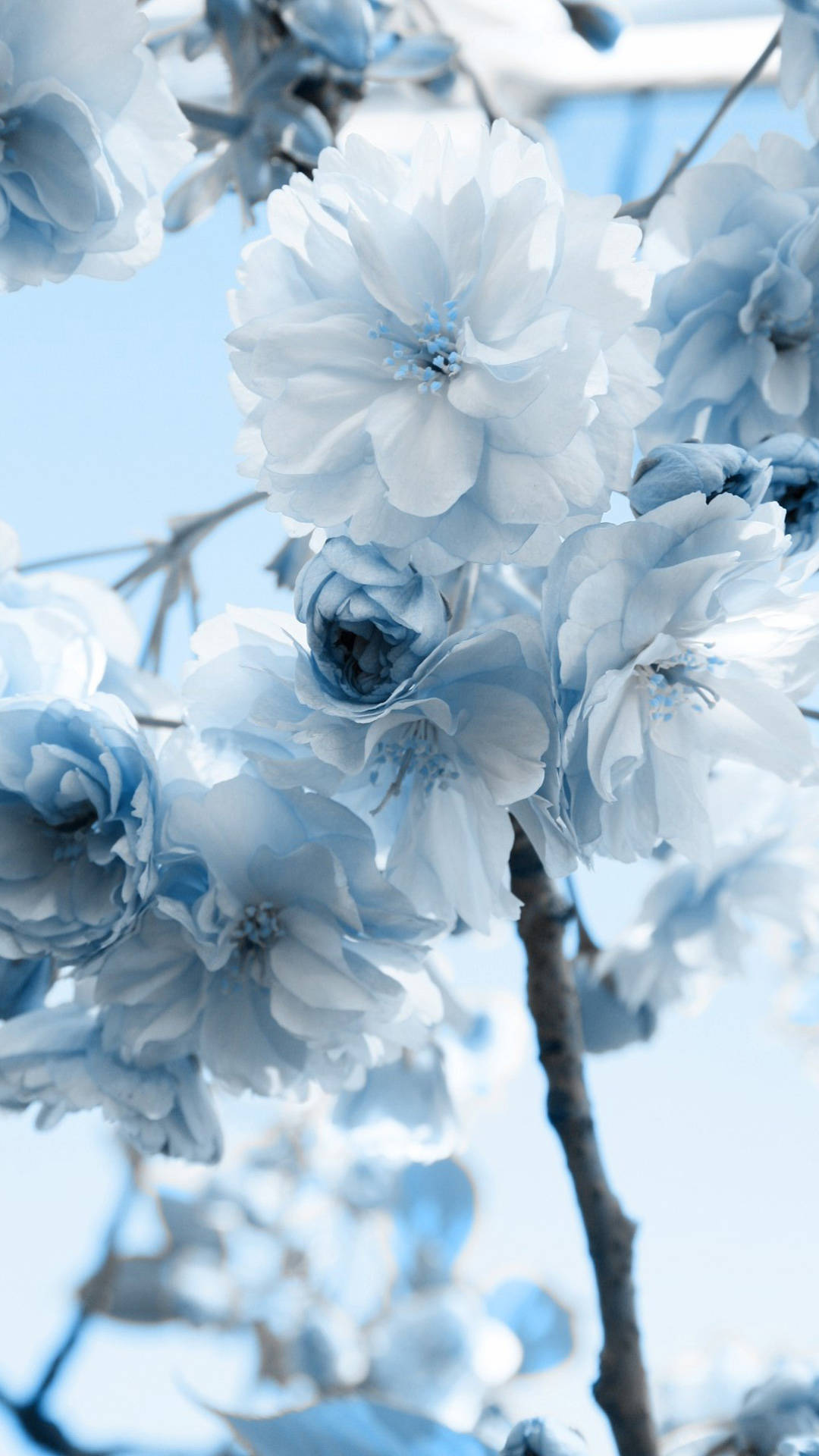 Blue and white flower HD samsung galaxy s4 wallpaper 1080x1920