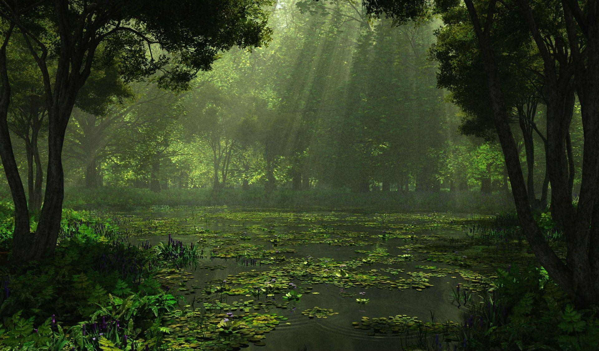 Swamp Backgrounds 1920x1125