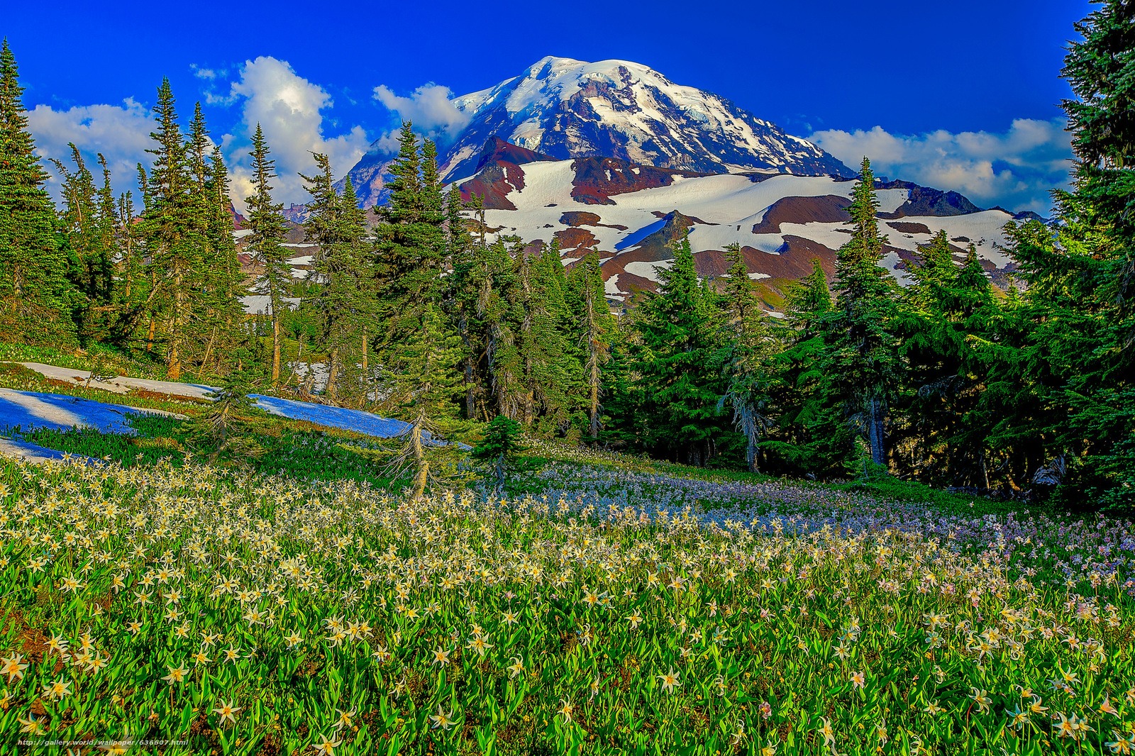Download wallpaper Mount Rainier National Park US National Parks 1600x1066