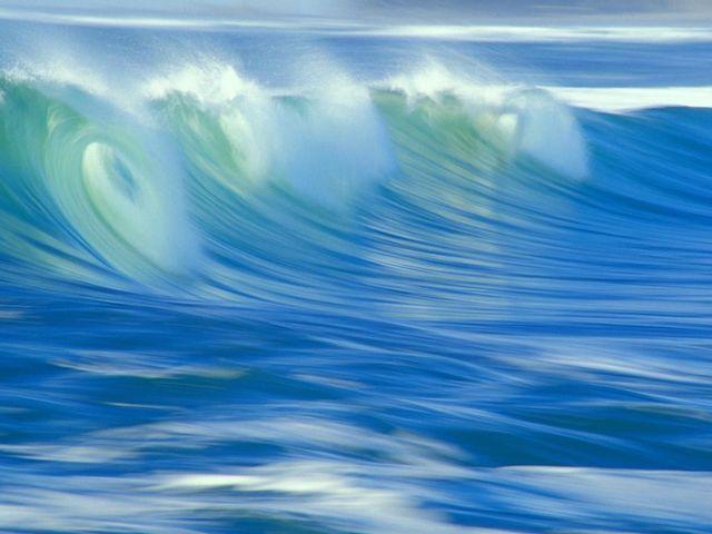 Ocean Life Screensaver Screenshot Pictures