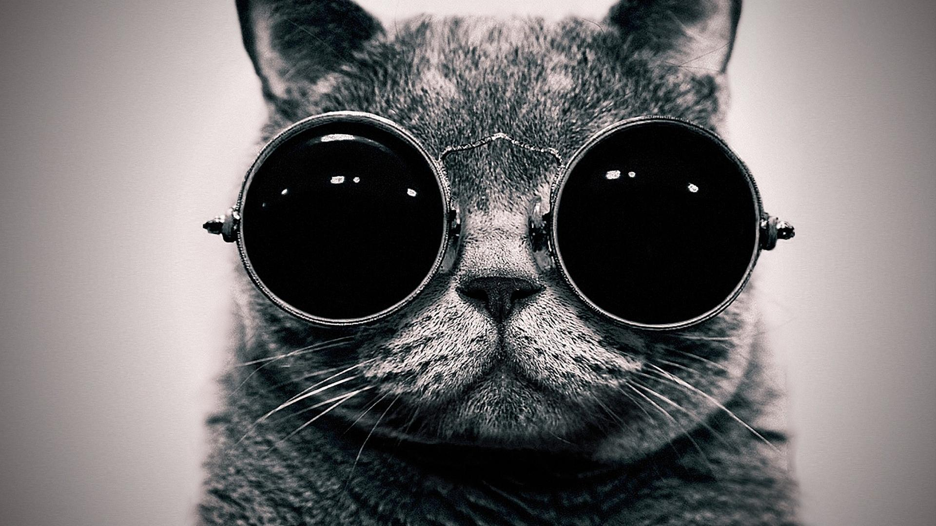 Cat steampunk wallpaper glasses funny wallpapers 19201080 1920x1080